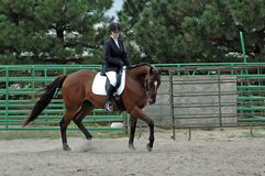 Paard en Ruiter Stock Fotografie