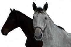 Paard en schaduw royalty-vrije stock foto