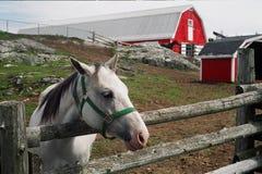 Paard en schuur royalty-vrije stock foto's