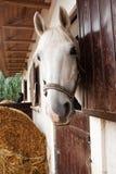 Paard en stal stock fotografie