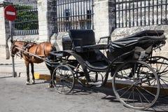 Paard en uitstekende bus stock foto