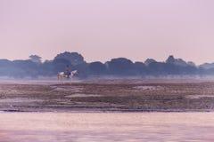 Paard en van Rider At Dawn On The Ganges Rivier Royalty-vrije Stock Afbeeldingen