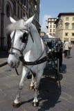 Paard en Vervoer Royalty-vrije Stock Afbeeldingen