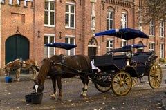 Paard en vervoer Stock Foto