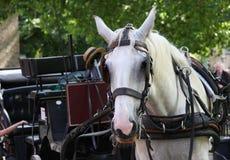 Paard en vervoer Royalty-vrije Stock Fotografie