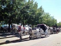 Paard en vervoer in de Oude Haven van Montreal Stock Foto's
