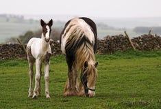 Paard en Veulen royalty-vrije stock foto's