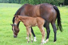 Paard en Veulen royalty-vrije stock fotografie