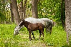 Paard en Veulen royalty-vrije stock foto