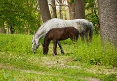 Paard en Veulen stock foto