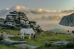 Paard en veulen bij Ruwe Piek stock afbeeldingen