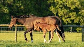 Paard en veulen in de avond zon royalty-vrije stock afbeeldingen