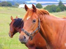 Paard en Weide Royalty-vrije Stock Foto's