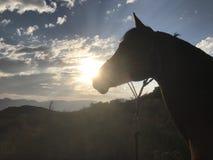 Paard en Woestijnzonsondergang stock fotografie