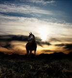 Paard en zonsondergang Stock Foto