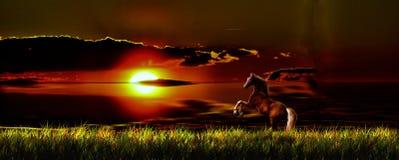 Paard en zonsondergang Royalty-vrije Stock Afbeelding