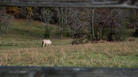 Paard in gebied het weiden stock foto's