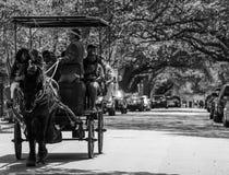Paard getrokken reis in Charleston, Sc Stock Afbeelding