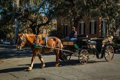 Paard getrokken vervoer in Savanne Royalty-vrije Stock Fotografie