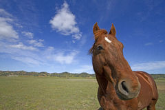 Paard & Grote Hemel Stock Foto's
