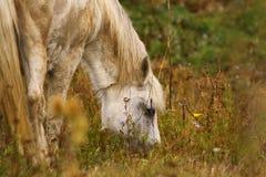 Paard het eten royalty-vrije stock afbeelding