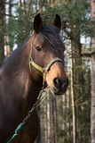 Paard in het hout Royalty-vrije Stock Foto