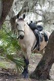 Paard in het Hout Royalty-vrije Stock Afbeelding