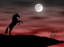 Paard in het maanlicht Stock Afbeeldingen