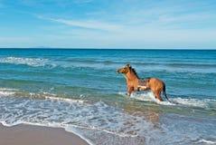 Paard in het overzees royalty-vrije stock afbeeldingen