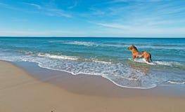 Paard in het overzees stock afbeelding