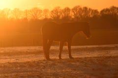 Paard in het plaatsen van zon Royalty-vrije Stock Afbeeldingen