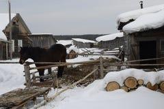 Paard in het Russische dorp stock afbeelding