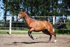 Paard het spelen in de paddock Royalty-vrije Stock Fotografie