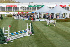 Paard het springen Royalty-vrije Stock Foto's