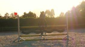 Paard het springen hindernis bij zonsondergang, stock video