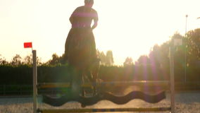 Paard het springen hindernis bij zonsondergang, stock footage