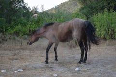 Paard in het stof Stock Afbeelding
