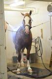 Paard het Verzorgen Stock Afbeeldingen