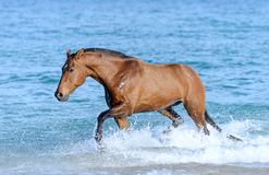 Paard in het water Stock Foto