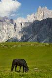 Paard het weiden in de weide Stock Fotografie