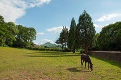 Paard het weiden in een de zomerweide Stock Foto