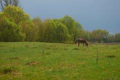paard het weiden in een weide stock afbeelding