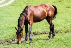 Paard het weiden op weide Stock Foto