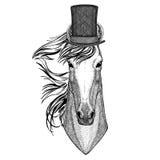 Paard, hoss, ridder, ros, courser dragend cilinderhoge zijden stock illustratie