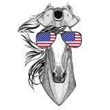 Paard, hoss, ridder, ros, courser dragend de Hoed met opgeslagen randen van de piraathoed, tricorn Zeeman, zeeman, zeeman, of zee vector illustratie