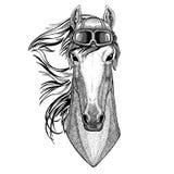 Paard, hoss, ridder, ros, courser dragend de Vliegenier van de leerhelm, fietser, motorfietshand getrokken illustratie voor tatoe stock illustratie