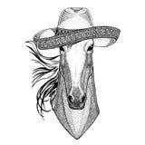 Paard, hoss, ridder, ros, courser het Wilde dierlijke het dragen van de de Fiesta Mexicaanse partij van sombreromexico de illustr stock illustratie