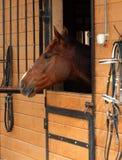 Paard in hun houten stal Royalty-vrije Stock Foto
