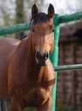 Paard in hun houten stal Stock Foto