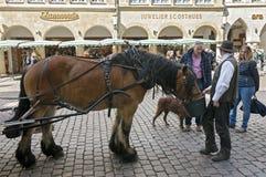 Paard, koetsier op straat Prinzipalmarkt, MÃ ¼ nster stock afbeeldingen